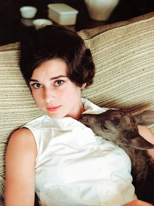 Audrey Hepburn - Animals (26)