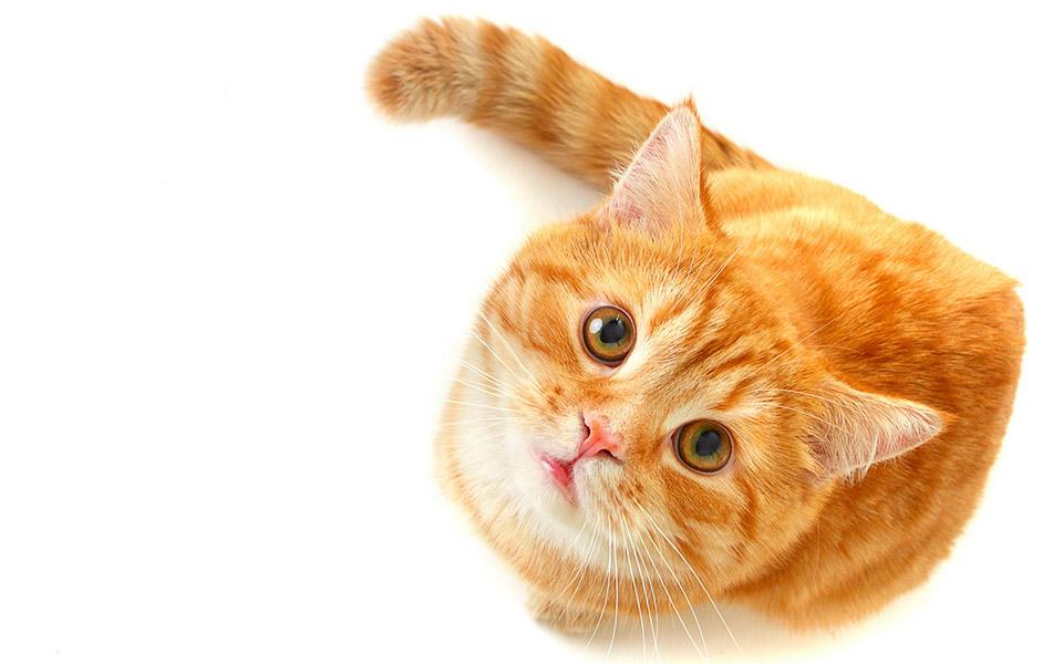 breakfast at tiffany's cat called orangey cat