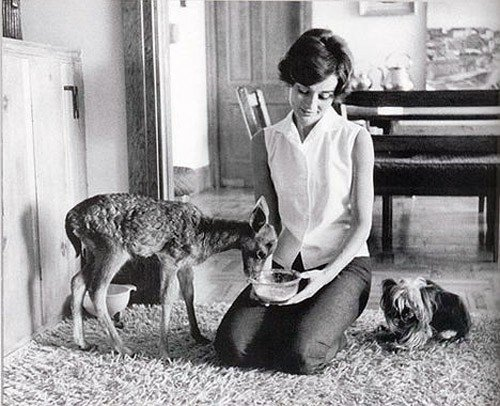 Audrey Hepburn - Animals (1)