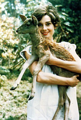 Audrey Hepburn - Animals (17)