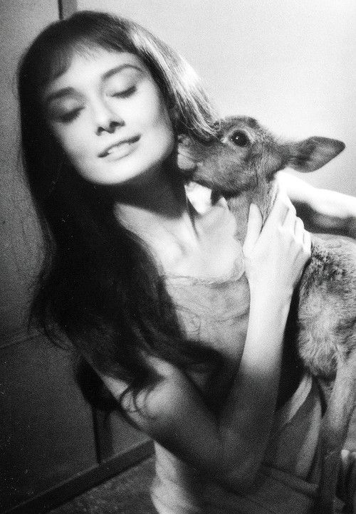 Audrey Hepburn - Animals (21)