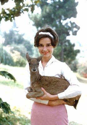 Audrey Hepburn - Animals (22)