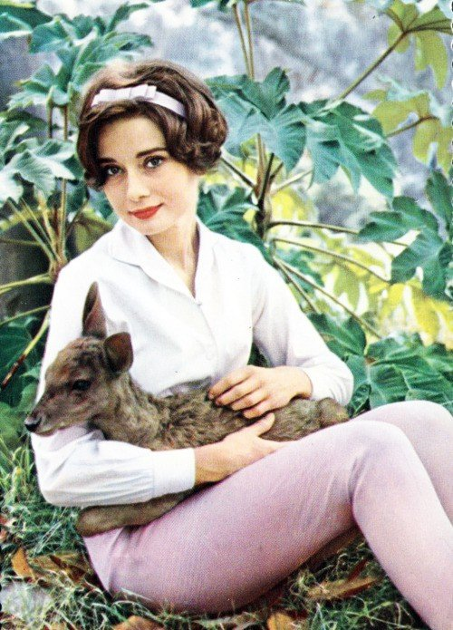 Audrey Hepburn - Animals (25)
